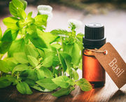 Basil Oil Supplier,  Basil CO2 Extracts Oil Manufacturer : Ozone Natura
